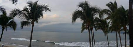 Puerto vallarta beach setting. Mexico puerto vallarta beach setting with coconut trees Stock Photo