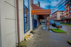 PUERTO VARAS, CHILE, SEPTEMBER, 23, 2018: Outdoor view of dog living in the streets and laying in the floor of the city royalty free stock photos