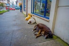 PUERTO VARAS, CHILI, 23 SEPTEMBER, 2018: Openluchtmening van hond die in de straten leven en in de vloer van de stad leggen stock foto's