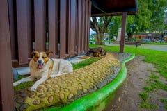 PUERTO VARAS, CHILI, 23 SEPTEMBER, 2018: Openluchtmening van hond die in de straten van de stad van Puerto Varas leven stock afbeelding