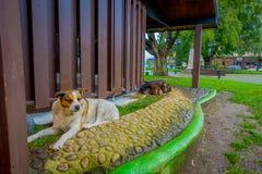 PUERTO VARAS, CHILI, 23 SEPTEMBER, 2018: Openluchtmening van hond die in de straten van de stad van Puerto Varas leven stock afbeeldingen