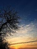 Puesta del sol, árbol Fotografía de archivo