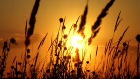Puesta del sol almacen de metraje de vídeo