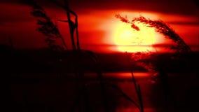 Puesta del sol almacen de video