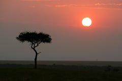 Puesta del sol africana Fotos de archivo libres de regalías
