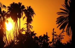 Puesta del sol africana Imagen de archivo