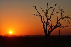 Puesta del sol africana Imagenes de archivo
