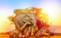 Puesta del sol africana del collage de los animales imagen de archivo