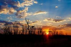 Puesta del sol africana con el árbol en frente Imagenes de archivo
