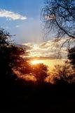 Puesta del sol africana con el árbol en frente Foto de archivo libre de regalías