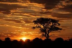 Puesta del sol africana con el árbol silueteado Imagen de archivo