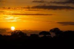 Puesta del sol africana con los árboles Fotografía de archivo libre de regalías