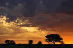 Puesta del sol africana con los árboles silueteados Foto de archivo libre de regalías