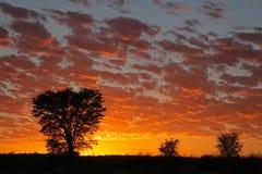 Puesta del sol africana con los árboles silueteados Imagenes de archivo