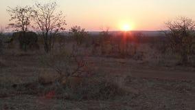 Puesta del sol africana con los elefantes almacen de metraje de vídeo