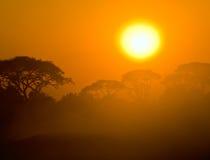 Puesta del sol africana en sabana Imágenes de archivo libres de regalías