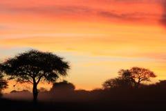 Puesta del sol africana - fondo del color, de la belleza y de la armonía Imagen de archivo libre de regalías