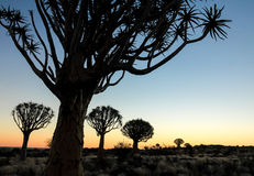 Puesta del sol africana hermosa con los árboles silueteados del estremecimiento imagen de archivo libre de regalías