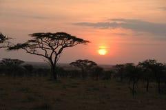 Puesta del sol africana, parque nacional de Serengeti, Tanzania Fotografía de archivo libre de regalías
