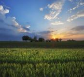 Puesta del sol agrícola de los campos del trigo fotografía de archivo libre de regalías