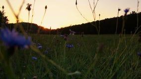Puesta del sol agradable en campo con el bosque y el cielo Paisaje checo almacen de metraje de vídeo