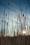Puesta del sol al borde de un lago Imágenes de archivo libres de regalías