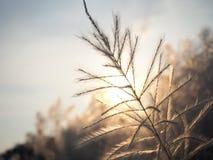 Puesta del sol amarilla de la hierba Imagen de archivo libre de regalías