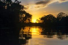 Puesta del sol amazónica imagen de archivo libre de regalías