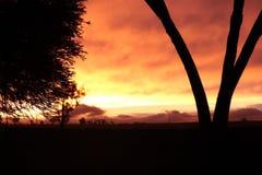 Puesta del sol anaranjada con el árbol Imagenes de archivo
