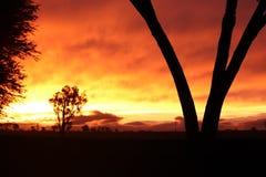 Puesta del sol anaranjada con el árbol Imágenes de archivo libres de regalías