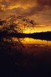 Puesta del sol anaranjada con las malas hierbas del pantano imagenes de archivo