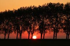Puesta del sol anaranjada con los árboles Imágenes de archivo libres de regalías