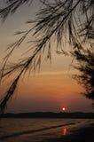 Puesta del sol anaranjada con los pinos negros Fotos de archivo libres de regalías
