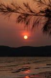 Puesta del sol anaranjada con los pinos negros Foto de archivo libre de regalías