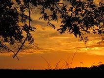 Puesta del sol anaranjada de octubre detrás de la silueta del árbol y de la hierba Fotografía de archivo libre de regalías