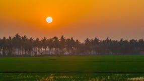 Puesta del sol anaranjada en campos del arroz Imagen de archivo libre de regalías