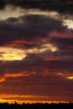 Puesta del sol anaranjada sobre pinos Fotos de archivo libres de regalías