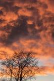 Puesta del sol anaranjada y árbol Fotografía de archivo libre de regalías