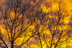 Puesta del sol anaranjada y árbol Imagen de archivo