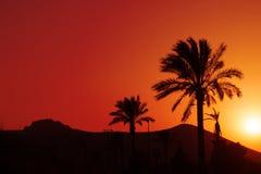 Puesta del sol andaluz anaranjada con las palmeras de la silueta Fotografía de archivo