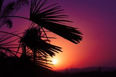 Puesta del sol andaluz con las palmeras de la silueta Fotografía de archivo libre de regalías