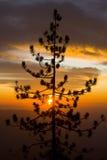 Puesta del sol ardiente de Yosemite Imagenes de archivo