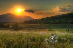 Puesta del sol asombrosa del verano con las margaritas Foto de archivo