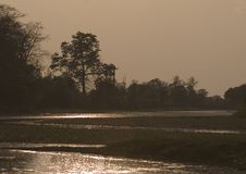 Puesta del sol asombrosa en la selva, Bardia, Nepal Imágenes de archivo libres de regalías