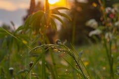 Puesta del sol asombrosa en montañas Flores salvajes contra la nube colorida Imagen de archivo libre de regalías