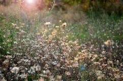 puesta del sol augusta en Kherson Fotografía de archivo