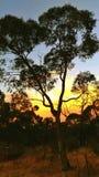 Puesta del sol australiana Fotografía de archivo