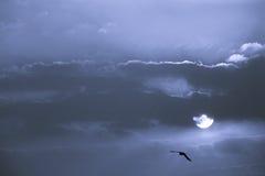 Puesta del sol azul y pájaro foto de archivo libre de regalías