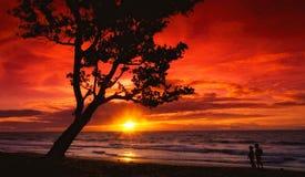 Puesta del sol bajo el árbol Imagen de archivo libre de regalías