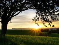 Puesta del sol bajo el árbol fotografía de archivo libre de regalías